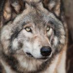 Le nouveau mâle alpha : Réagir ou Réfléchir